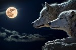 wolf-torque-wolf-moon-cloud-45242